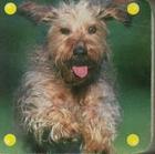 Mini kosteczka Pies PRACA ZBIOROWA - PRACA ZBIOROWA