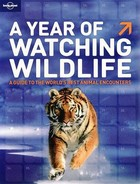 A Year of Watching Wildlife - PRACA ZBIOROWA